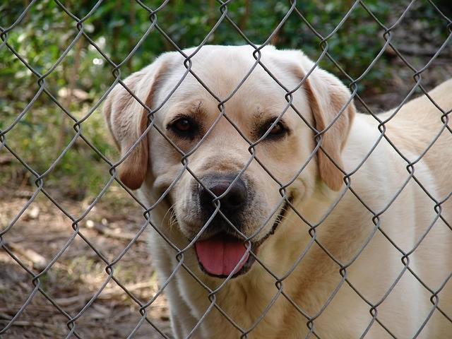Hundezwinger Ratenzahlung