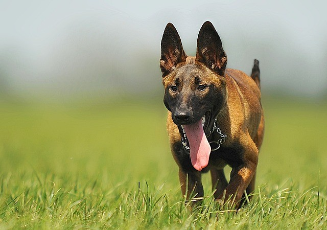 Hundezwinger günstig finanzieren