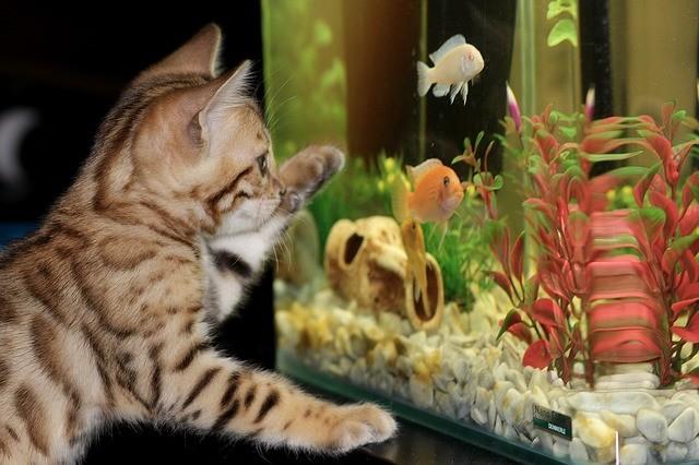Aquarium finanzieren