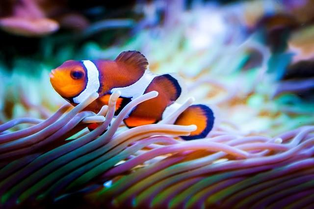 Aquarium per Ratenzahlung